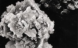 顕微鏡で見たシラスの構造
